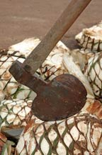 hacha - axe or hatchet used to harvest agave
