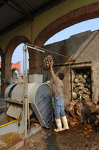 cooked agave being loaded into crusher