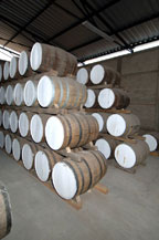 tequila is stored in oak barrels for aging