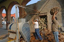 Workers put the cooked agave hearts into a crusher by hand at fabica Impulsora Rombo in Amatitan.